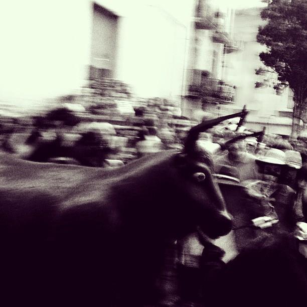 El bou. Foto: Laia Marín