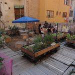 Hortalisses ecològiques sobre restes romanes