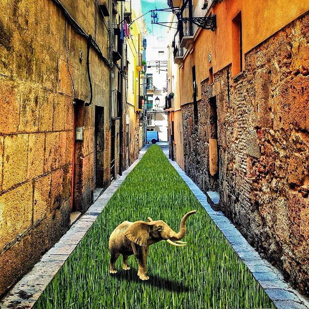 Shivadelico - Tarragona salvaje