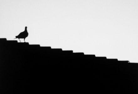 Foto ocell a la teulada - Dolors Ayxendri